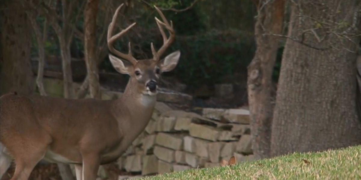 Kentucky officials fight to keep out fatal deer disease