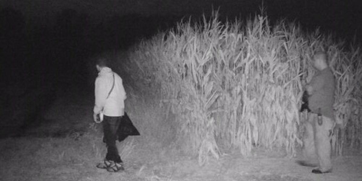 Several arrested in stolen hemp case from Kentucky farmer