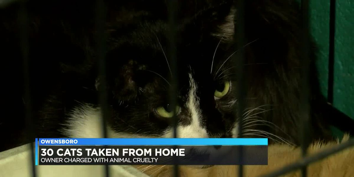 Owner charged with animal cruelty after 30 cats removed from home - clipped version