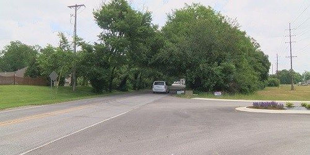 Work scheduled to remove dead trees from Newburgh tree canopy